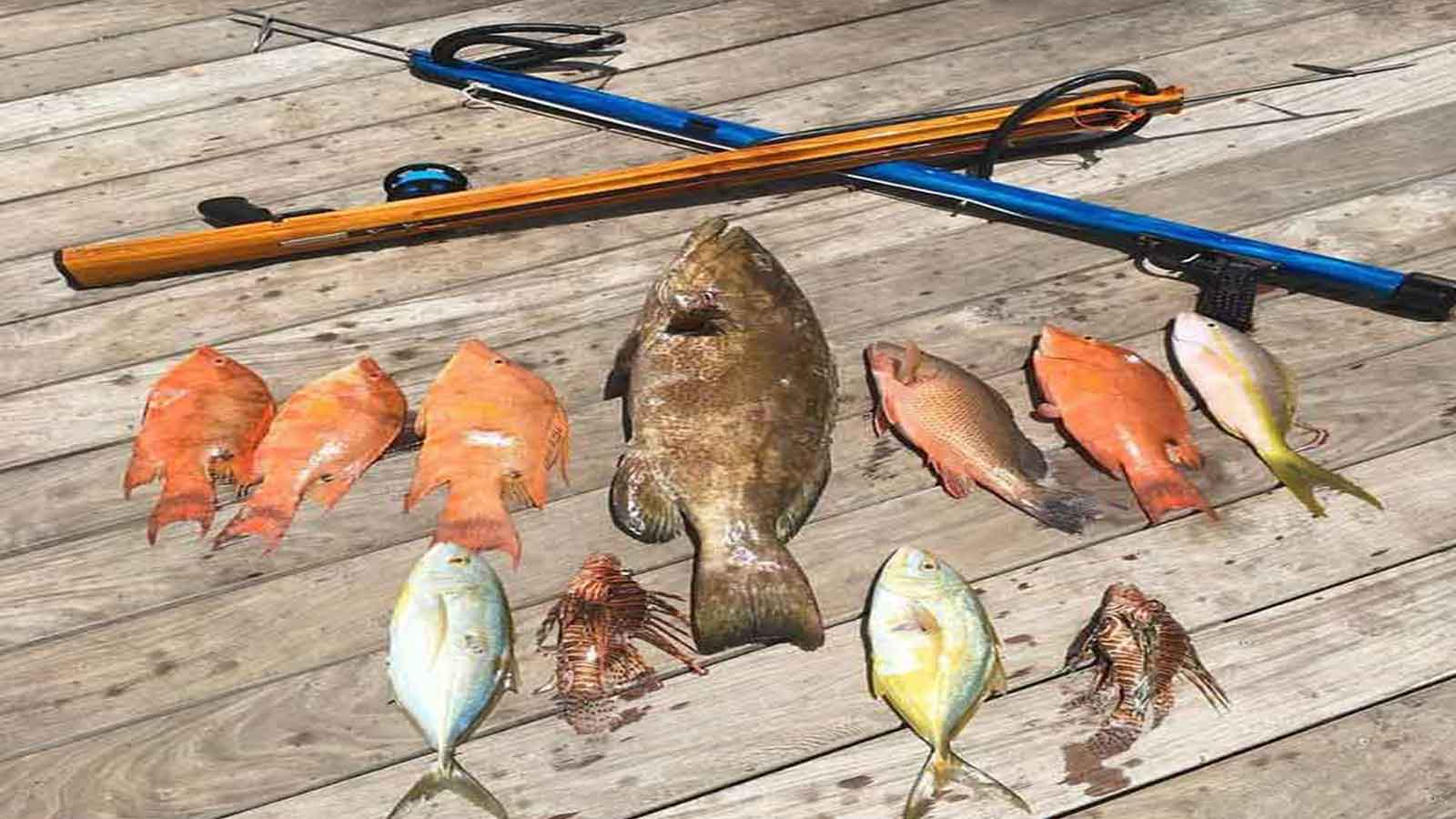 Islamorada Spearfishing Charter